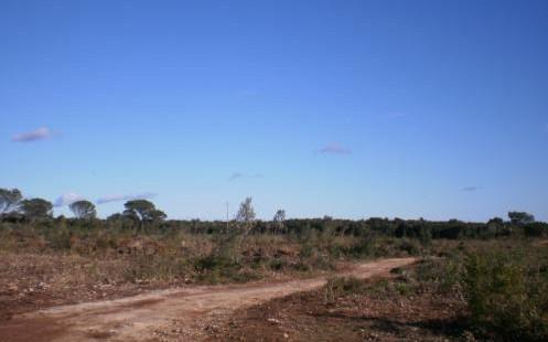 affouage, zone de parc photovoltaique